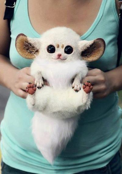 Rocky Ridge Refuge pranked their fans into thinking this inari fox was a new resident.