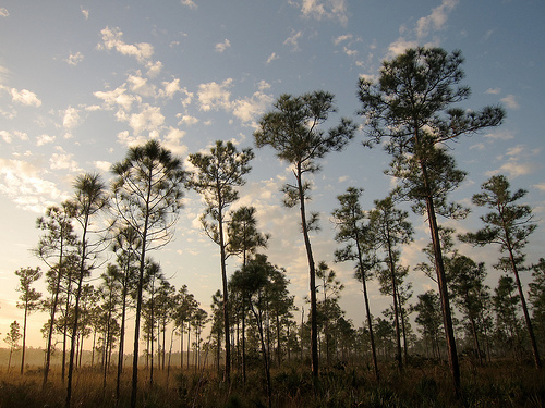 Everglades National Park is one of the best camping places