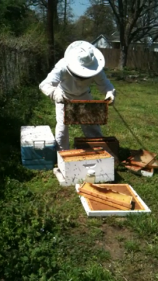Our moving expert is a beekeeper on the side