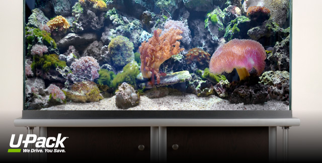 How to move an aquarium u pack for Moving fish tank