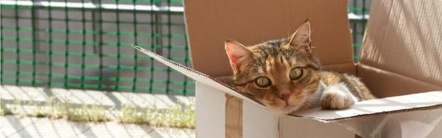 Tips for Moving a Cat Long Distance