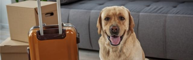 Things to Know About Moving Pets to Canada